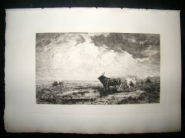 A. Massse 1885 Etching. Bulls in the Roman Campagna, Italy